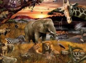 Animal Planet Safari
